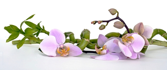 Flower Information About Orchids Orchids Growing Orchids In The